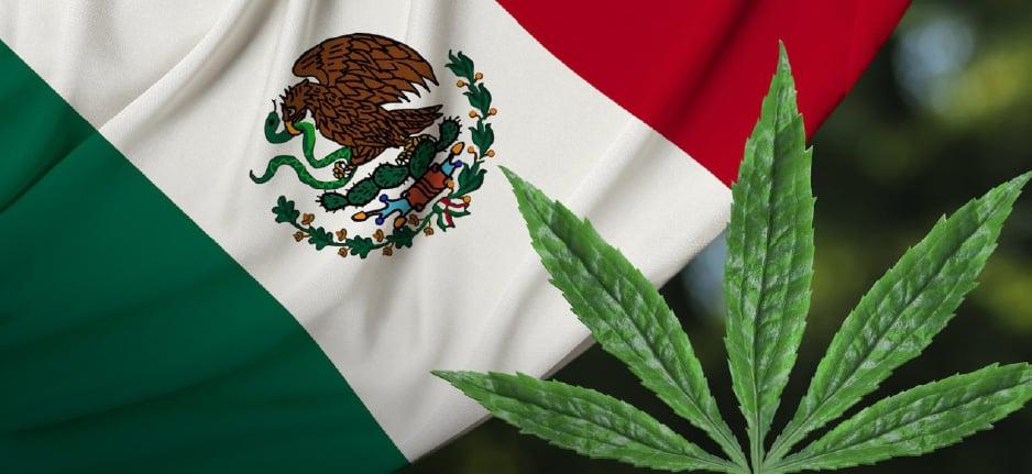 cannabis plant by mexican flag