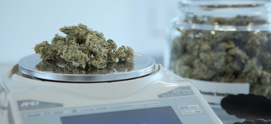 cannabis on a scale in a dispensary