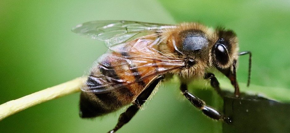 bee on green background