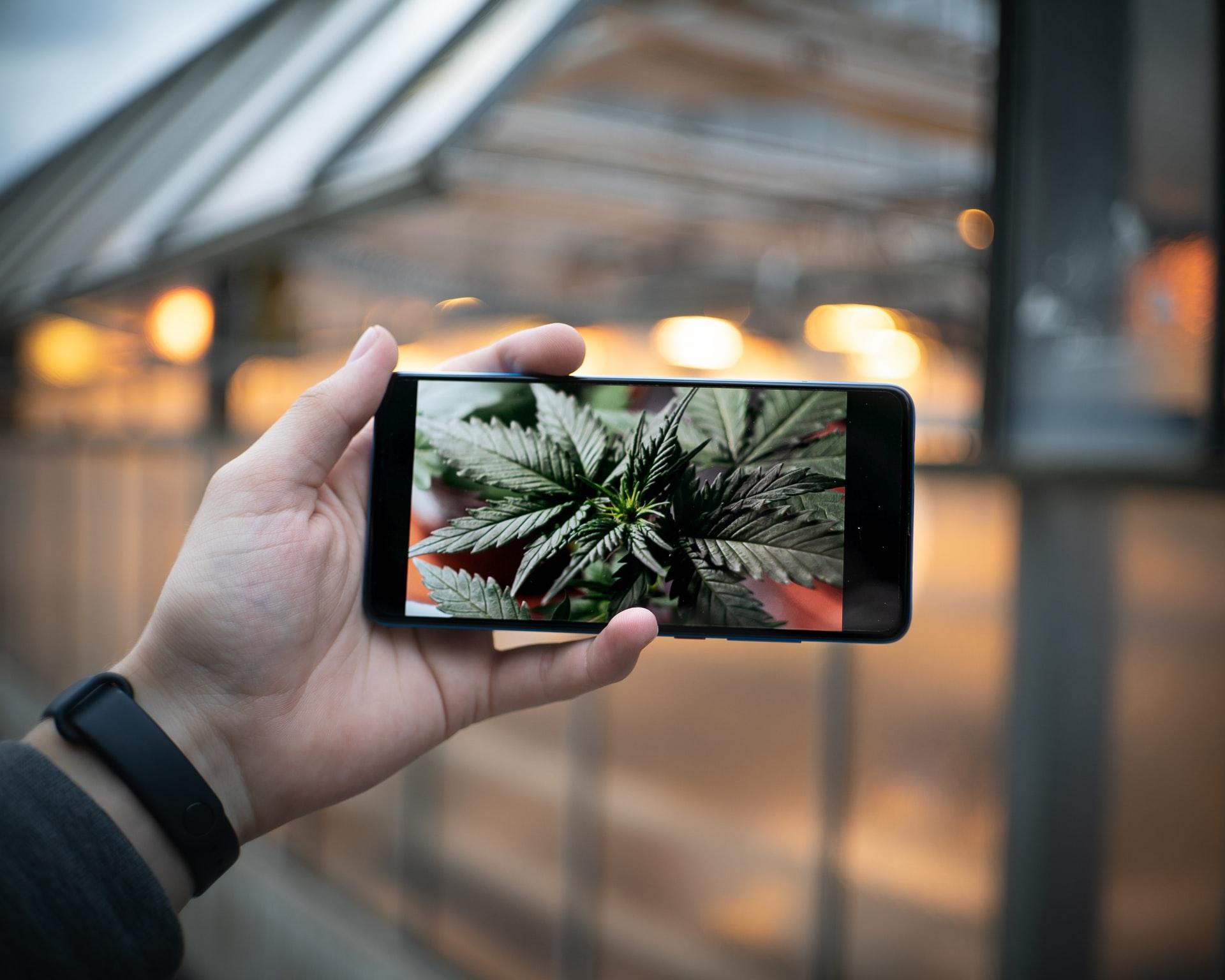 man holding phone with photo og cannabis